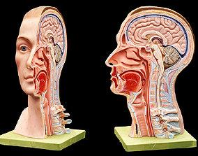 3D asset animated Human Head