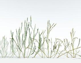 3D EVERYPlant Hollow-Stemmed Sphenophyllum EXT --24
