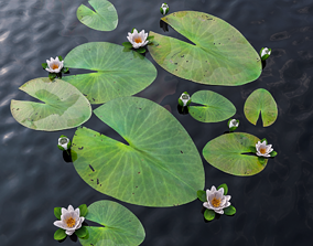Water Lily water 3D