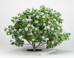 3D model Rhododendron white