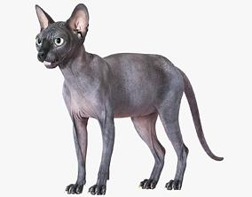 Sphynx Cat Black 3D