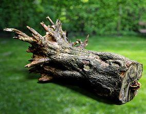 Huge Tree Root Stump 3D asset