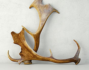 Naturally Shed Fallow Deer Antlers 3D model