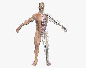 Male Body Full Anatomy 3DSmax