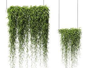 Plants in Hanging Planters v2 - 2 models