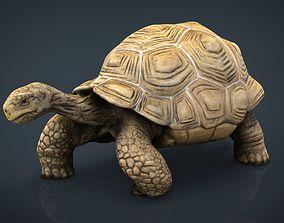 3D model Giant Tortoise