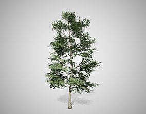 3D model Carolina Buckthorn Tree