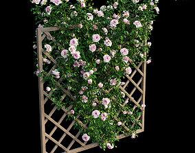 3D model Rose plant set 12