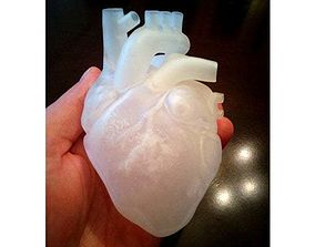 anatomical Anatomical heart 3d printed