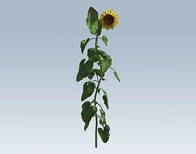 garden Sunflower 3D