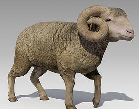 3D model Ram Animated